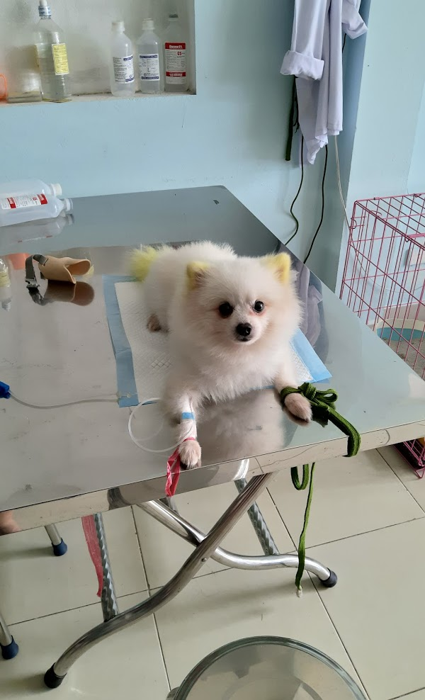 Titi Pet Shop