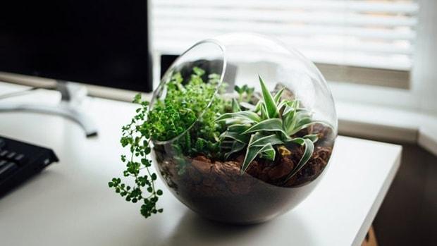 cách làm sạch không khí trong phòng