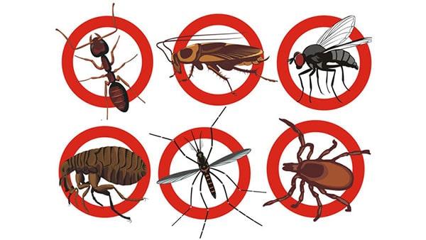 diệt côn trùng Đà Nẵng - VinPest